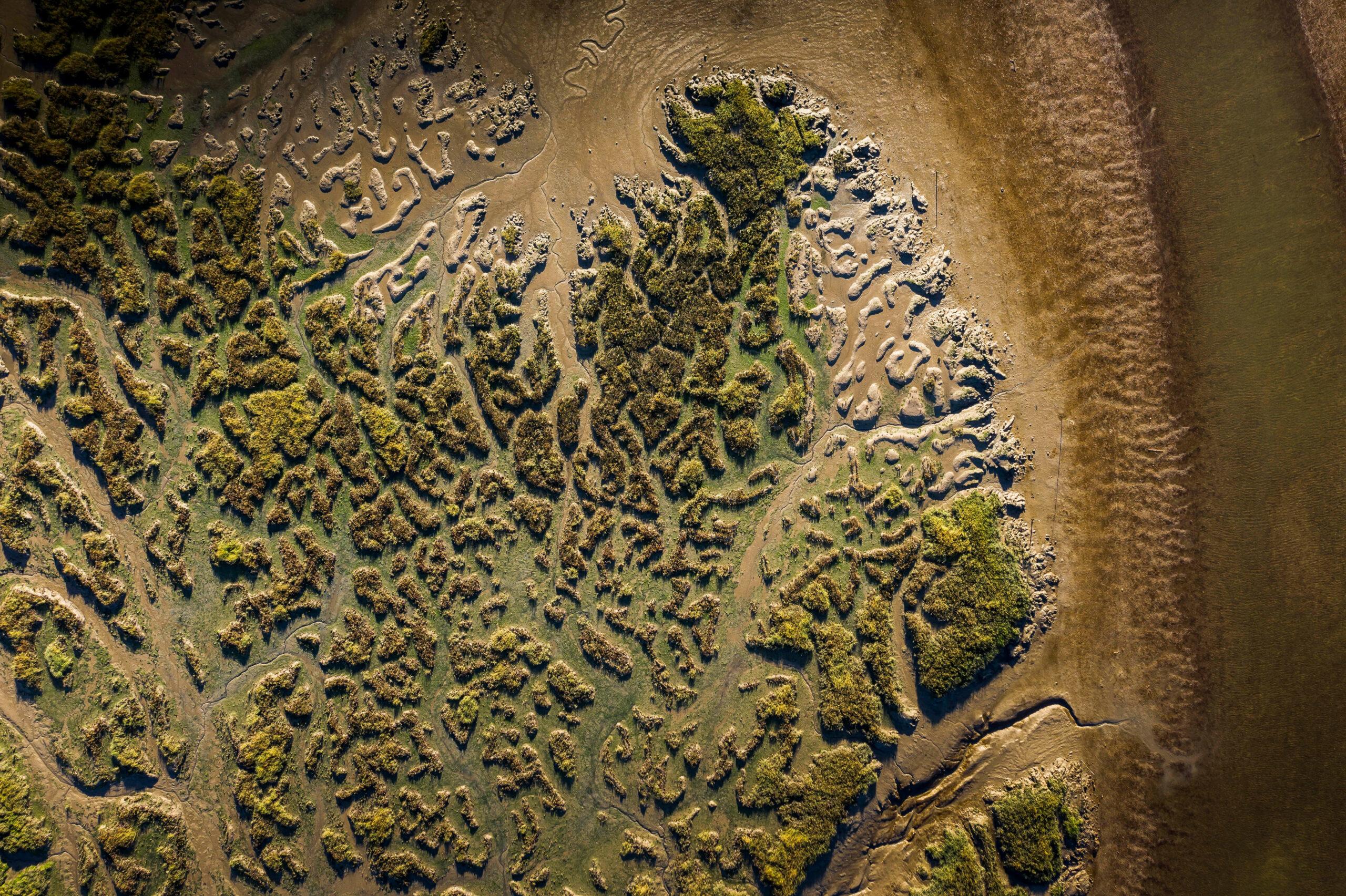 Marsh detail on banks of the Deben